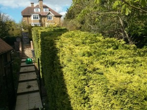 Garden maintenance Guildford