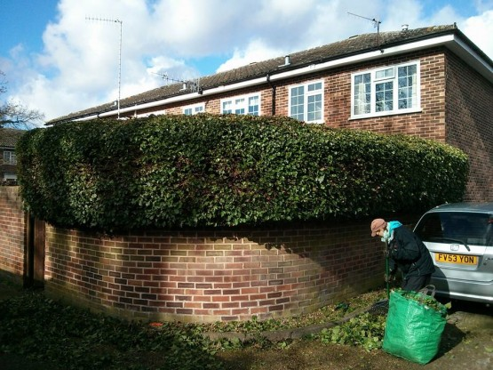 Hedge cutting Guildford