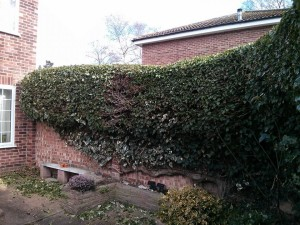 Hedge trimming Guildford