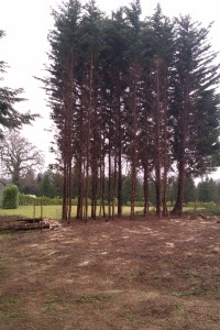 Tree surgery Surrey and Hampshire