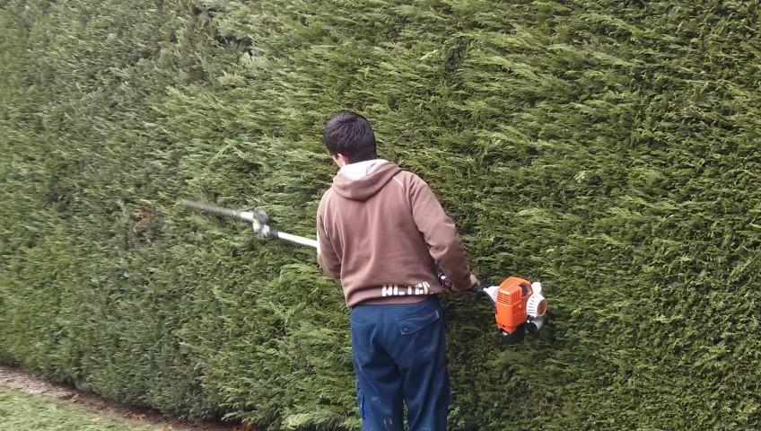 Hedge trimming Godalming, Farncombe