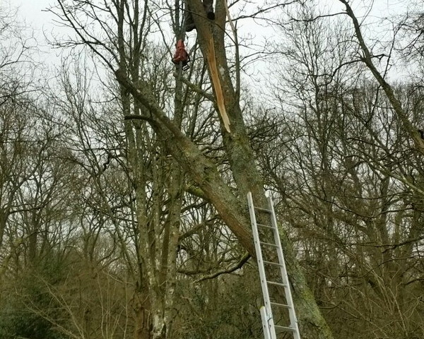 tree cutting Godalming
