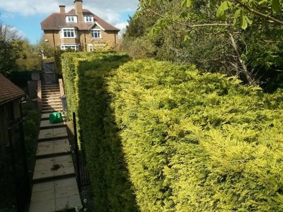 Garden maintenance Guildford