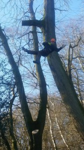 Tree surgery Guildford