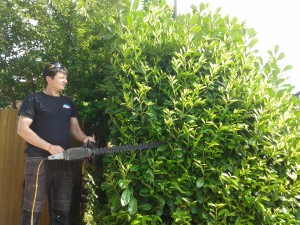 Hedge cutting Surrey and Hampshire