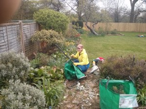 Weeding, garden maintenance Surrey