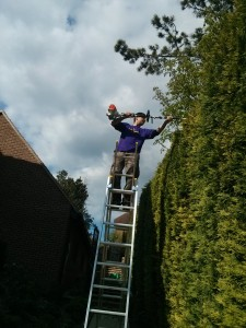 Hedge cutting Guildford, Godalming