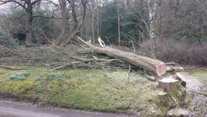 tree cutting Surrey