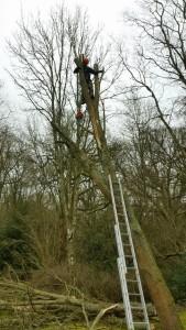 tree cutting Godalming
