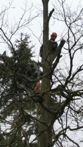 tree cutting Hampshire